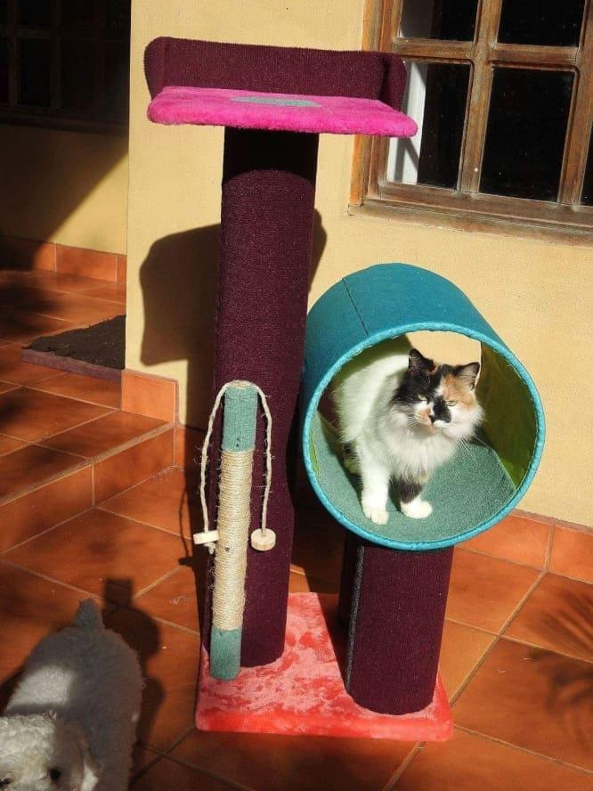 Rascador para gatos 4