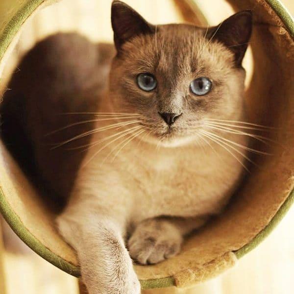 Cats Costa Rica