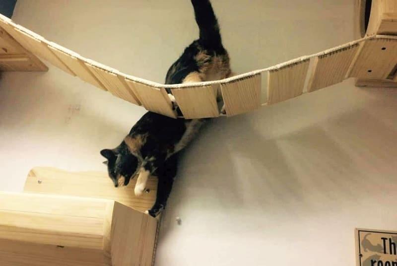 Puentes para gatos